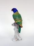 pappagallo1G