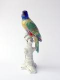 pappagallo1a